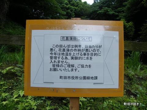 20100530034薬師池公園花菖蒲田