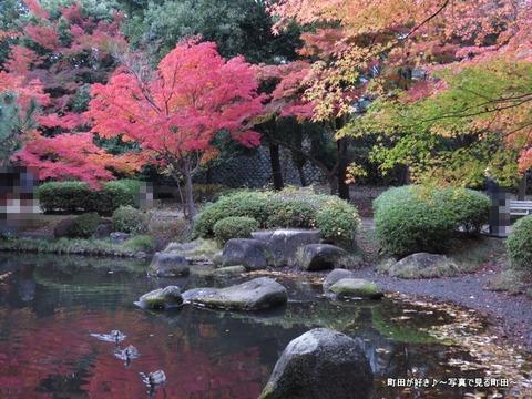 2014112312紅葉@町田市・芹ヶ谷公園