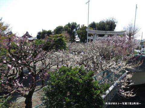 2014030812町田天満宮の梅の花