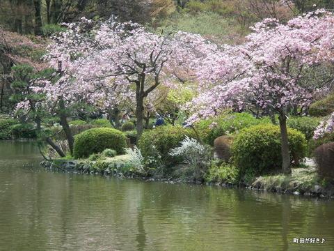 20120415124ヤエベニシダレ薬師池公園