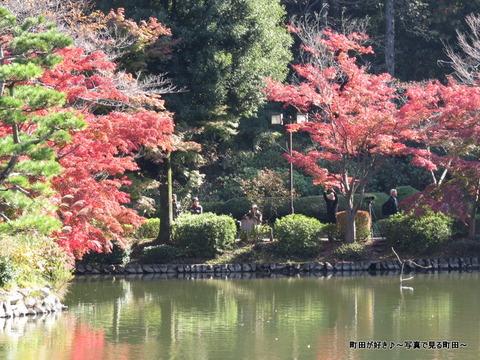 20131116081薬師池公園の紅葉