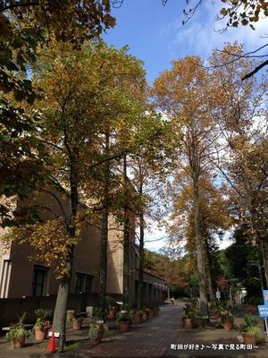 2014110315秋の芹ヶ谷公園の風景