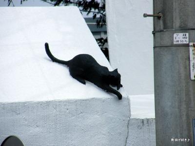 2010082108黒猫クロネコ成瀬街道
