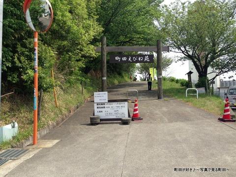 20130429002町田えびね苑、2013年開花の様子