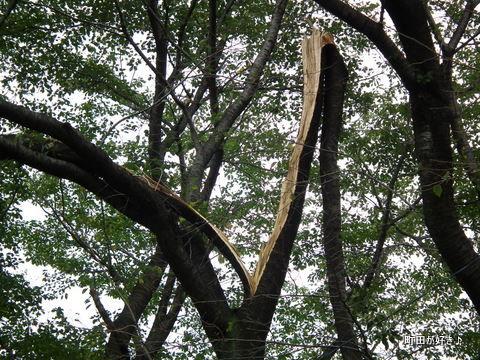 2011092302頭上注意、台風の傷跡@恩田川
