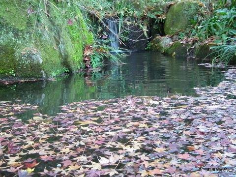 2011121157紅葉と野鳥@薬師池公園
