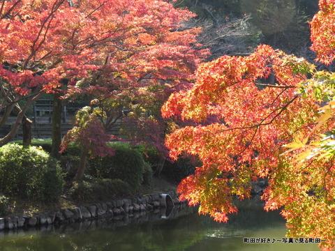 20131116037薬師池公園の紅葉