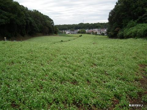 2011092334残念な、蕎麦の白い花たち