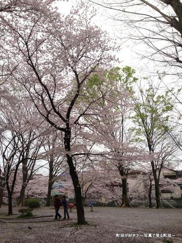 20130331082弁天橋公園のサクラが綺麗でした