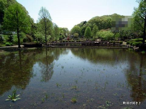 20110424165薬師池公園のハス田