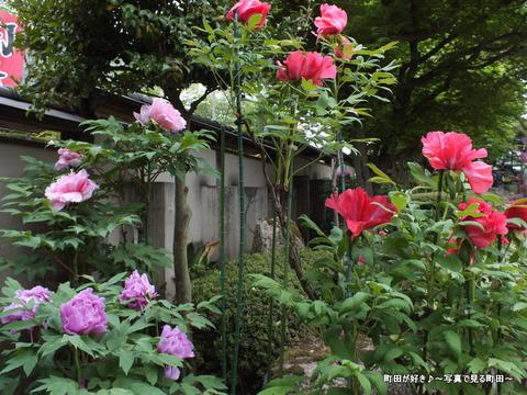 20130420196町田ぼたん園