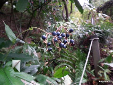 20111105095紫の実@薬師池公園