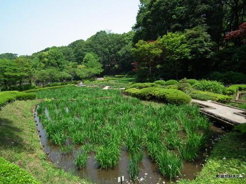 2011052109花菖蒲園@薬師池公園