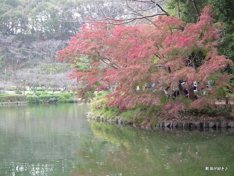 20111105107紅葉モミジ@薬師池公園