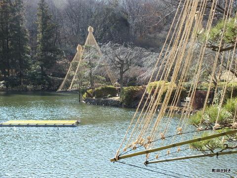 2012122412冬の薬師池公園