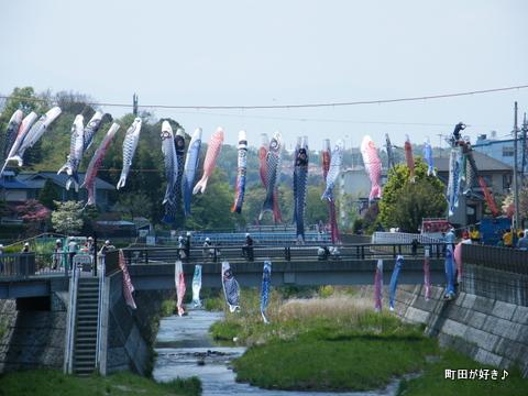 20100425051平成22年第7回鶴見川泳げ鯉のぼり