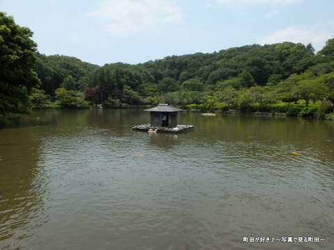 2013052620なんとなく亀・・・@薬師池公園