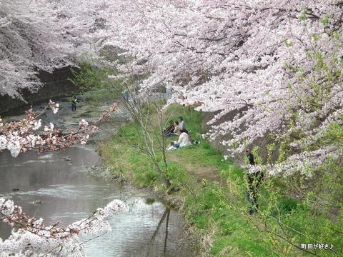 20110410139恩田川・高瀬橋の桜