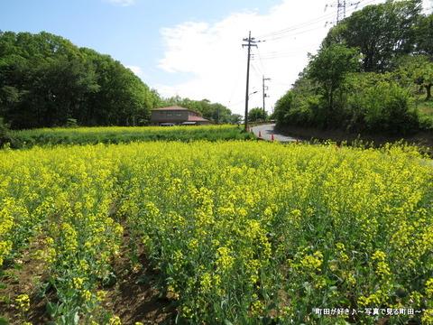 20140428066七国山の菜の花畑