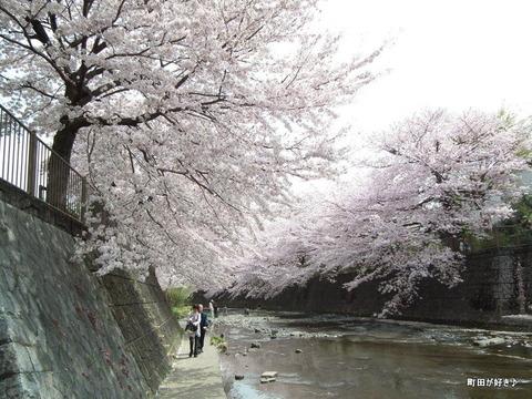 20110410150恩田川・高瀬橋の桜