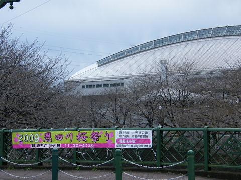 2009032009.jpg 2009恩田川桜祭り