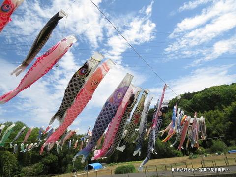 20140428026鶴見川泳げ鯉のぼり