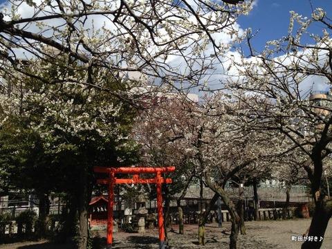 2012032533町田天満宮の梅