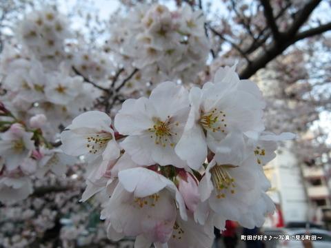 20140330145恩田川沿いの桜並木