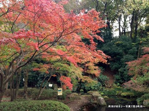 2015112203『芹ヶ谷公園』の風景