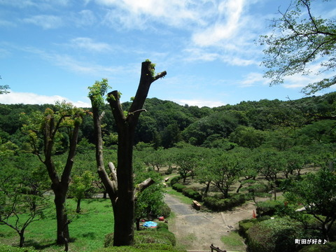20110723072薬師池公園・緑と青空
