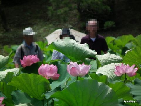 20110723047薬師池公園の大賀ハス