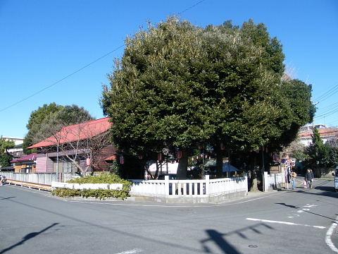 2009010225.jpg 森野住吉神社の初詣