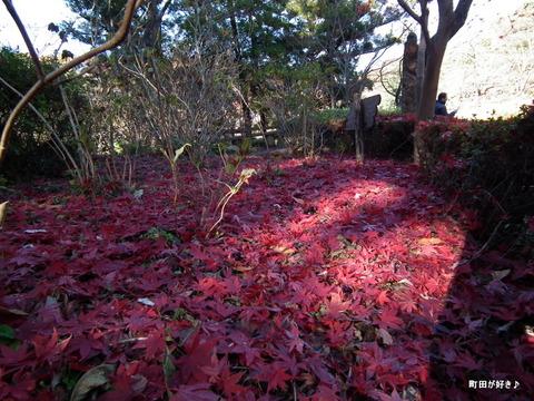 2011121134紅葉と野鳥@薬師池公園