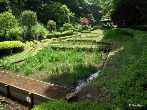 2011052107花菖蒲園@薬師池公園