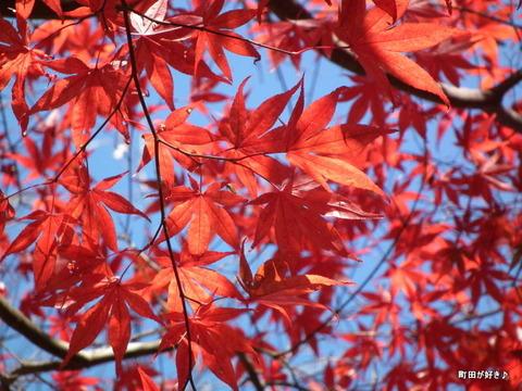 20101204043紅葉の薬師池公園