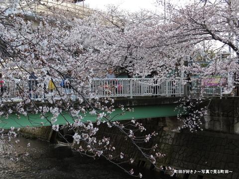 20140330136恩田川沿いの桜並木