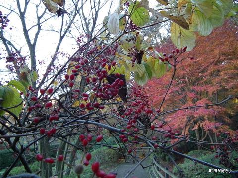 2011121149紅葉と野鳥@薬師池公園