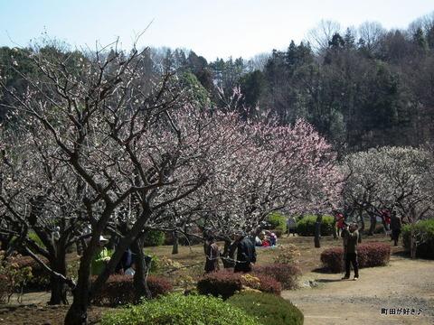 20110313035薬師池公園・梅園
