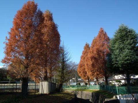 2010121111これも紅葉?秋の空