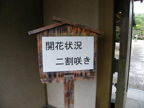 20090418013.jpg 町田ぼたん園