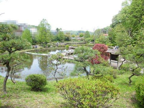 20090418133.jpg 薬師池公園のハス田