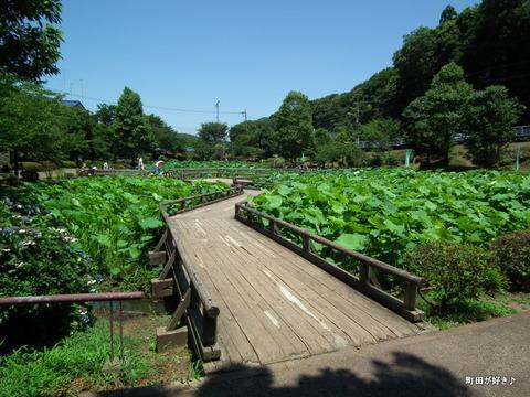 2011071032大賀ハス@薬師池公園