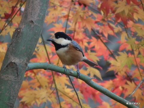 2011121170紅葉と野鳥@薬師池公園