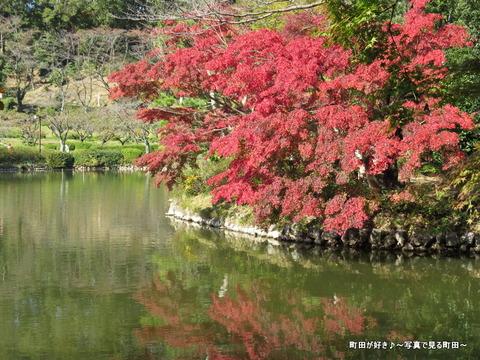 20131116035薬師池公園の紅葉
