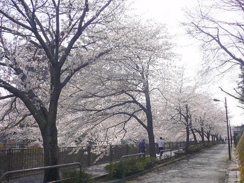 2006040101.jpg