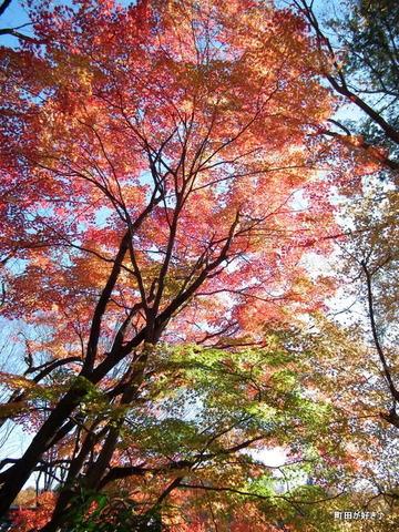 20101204083紅葉の薬師池公園
