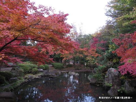 2014112326紅葉@町田市・芹ヶ谷公園