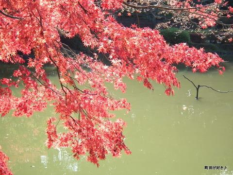 2011112030モミジ紅葉@薬師池公園