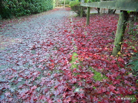 2011121163紅葉と野鳥@薬師池公園