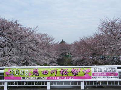 20090404072.jpg 恩田川の桜が見頃です